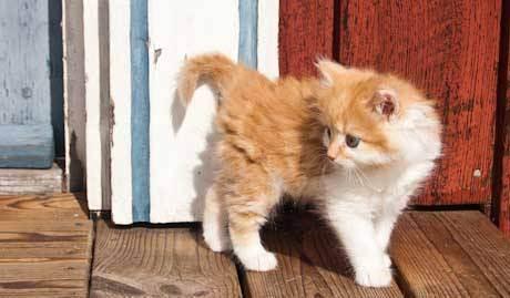 Как назвать рыжего кота: имена, клички для котенка-мальчика рыжего цвета