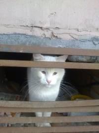 Почему в доме не приживаются кошки: разбираемся в реалиях и народных приметах