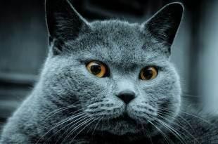 Fitmin solution cat weight control - рейтинг, обзор корма, сравнение и анализ fitmin solution cat weight control, состав и описание корма, плюсы и минусы fitmin solution cat weight control, отзывы о корме, характеристика и дозировка