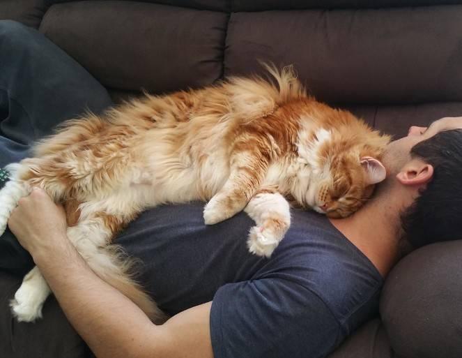 Почему кошки любят спать с хозяевами: мнения опытных заводчиков