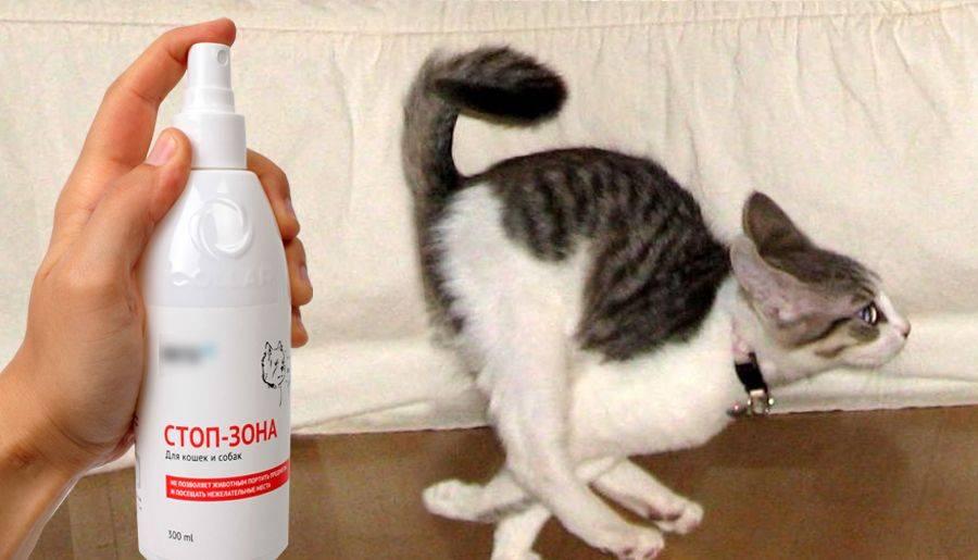 Какой запах отпугивает кошек: что они не любят и не переносят, как отпугнуть кота от мебели, комнатных растений и открытых грядок
