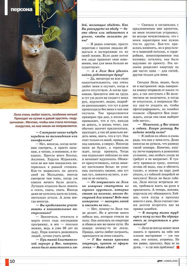 Какая память у кошек: интересные факты о мозговой деятельности котов и их особенностях восприятия действий и результата