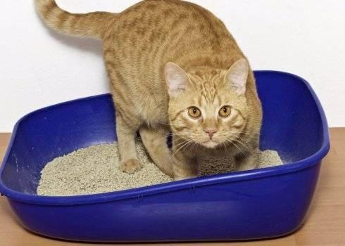 Какую миску выбрать для кошки