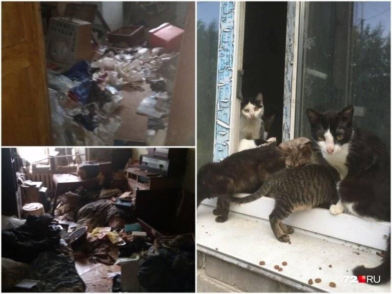 Куда сдать бездомную кошку? советы эксперта