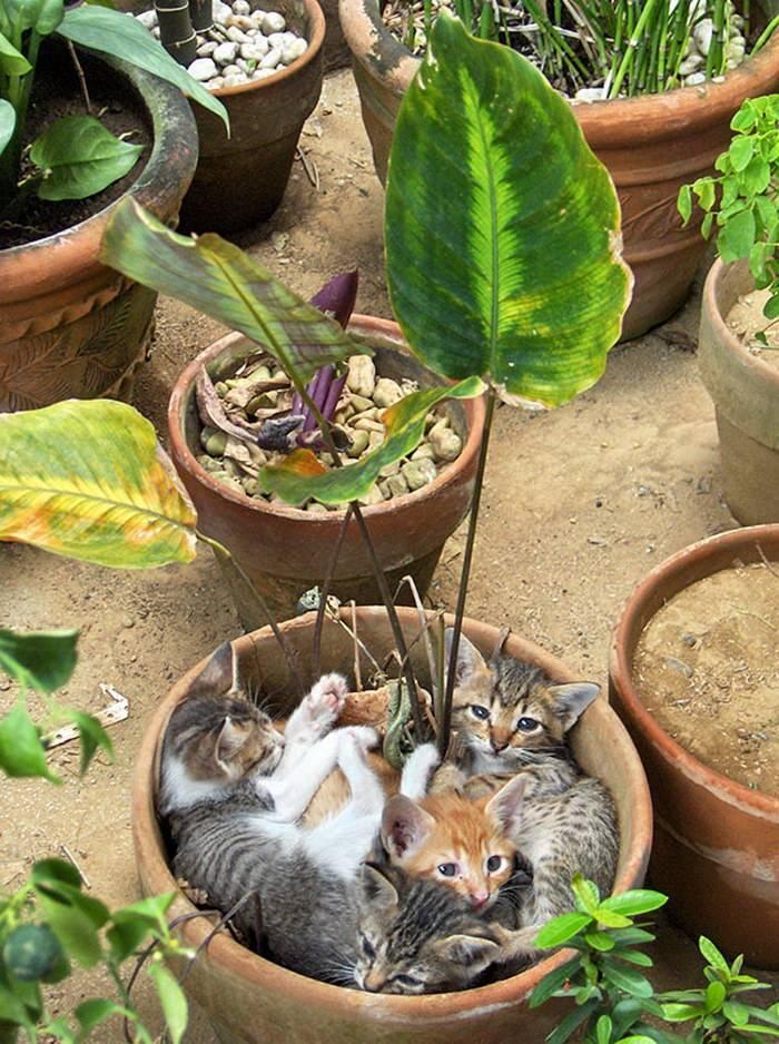 Как отучить кота гадить в цветочные горшки и лазить в цветы
