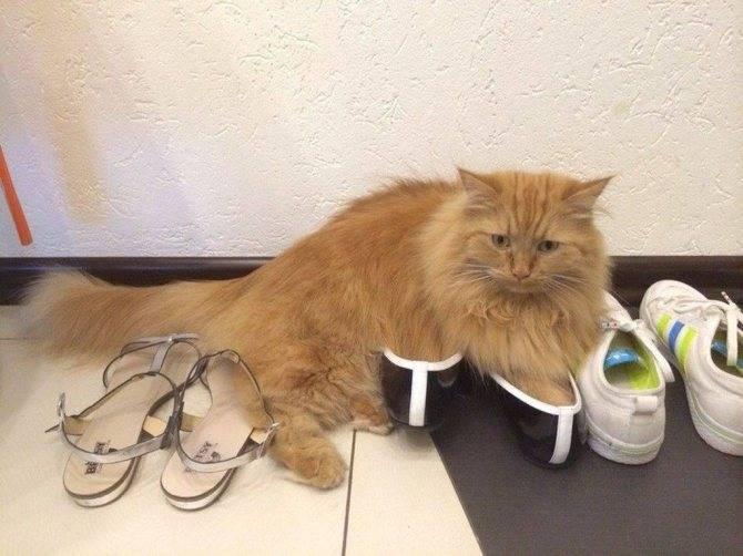 Отучаем кошку гадить в неположенном месте