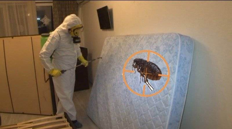 Топ-8 способов как избавиться от блох в доме: химическими препаратами, а также проверенными народными средствами | (фото & видео) +отзывы