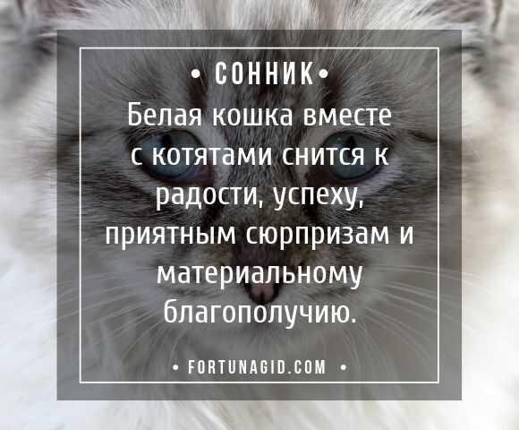 К чему снится серый кот, толкование сна по соннику