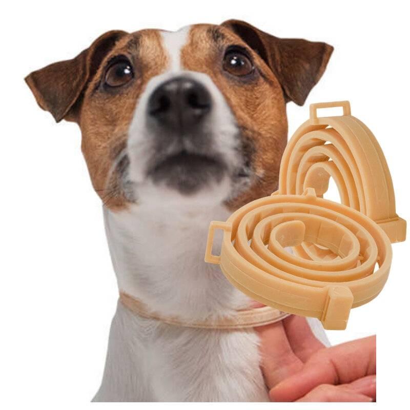 Клещи у собак. обработка собак от клещей, блох. защита от укусов клещей у собак. как вытащить клеща. -вест хайленд терьер