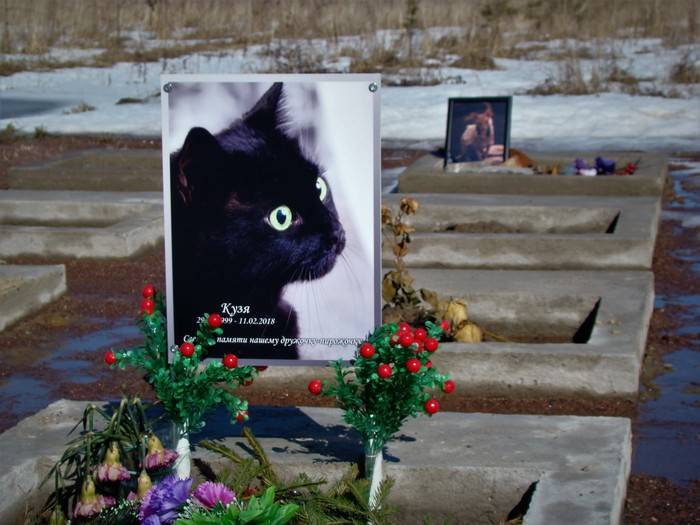 На какой день похоронить кота. как похоронить кошку зимой. сколько живут кошки и как они стареют