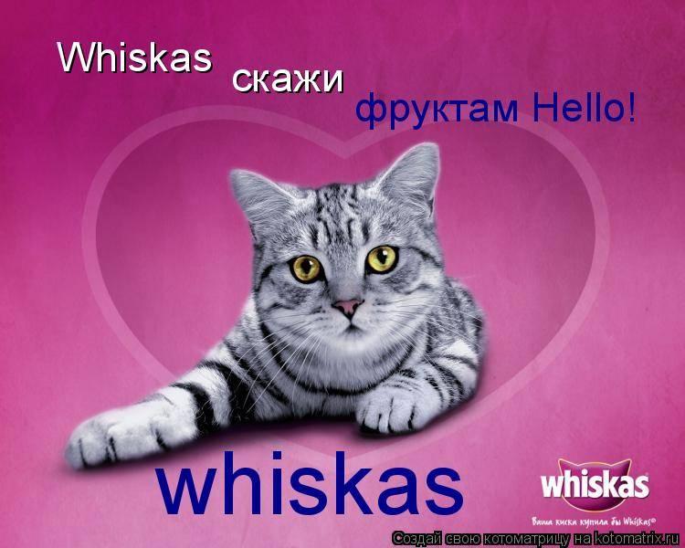 Рыжий кот из рекламы порода. «лицо» торговой марки whiskas и другие «звёзды» кошачьих реклам. какие актеры снимались в рекламе шеба