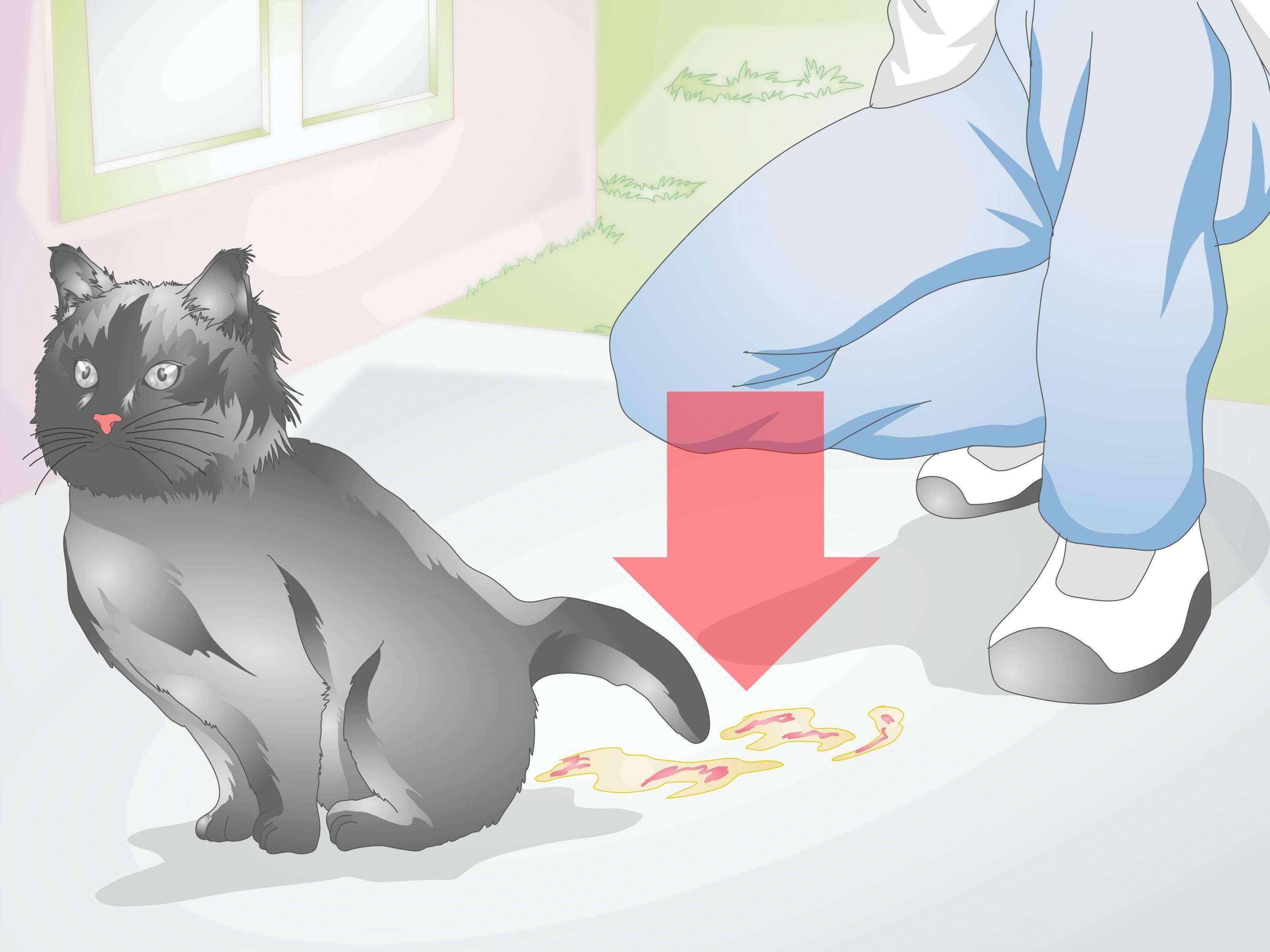 Почему беременным нельзя гладить кошек: плохие приметы и реальные угрозы.
