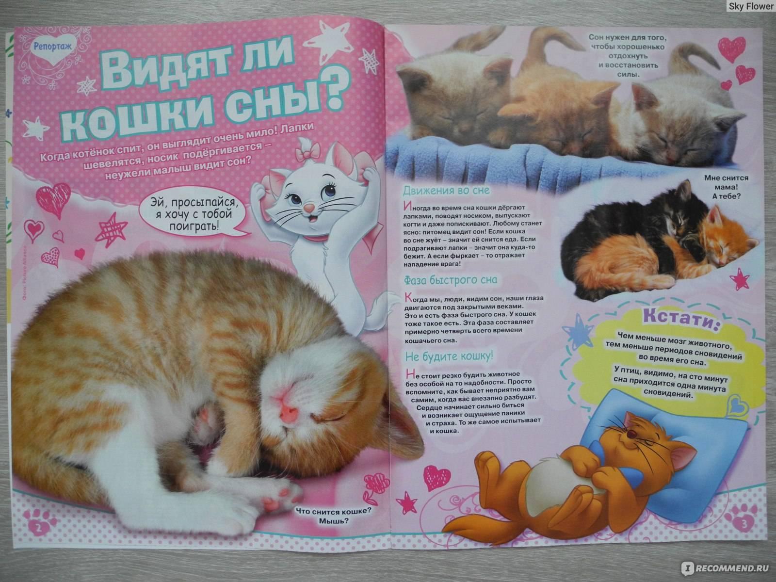 Подобрать кота