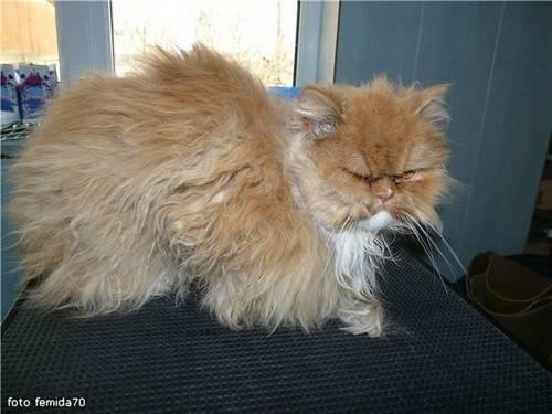 Как избавиться от колтунов у кошки и предупредить их появление