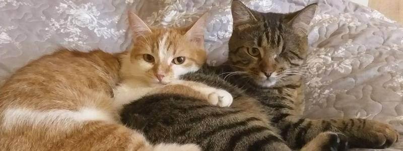 5 распространенных мифов о корме для кошек