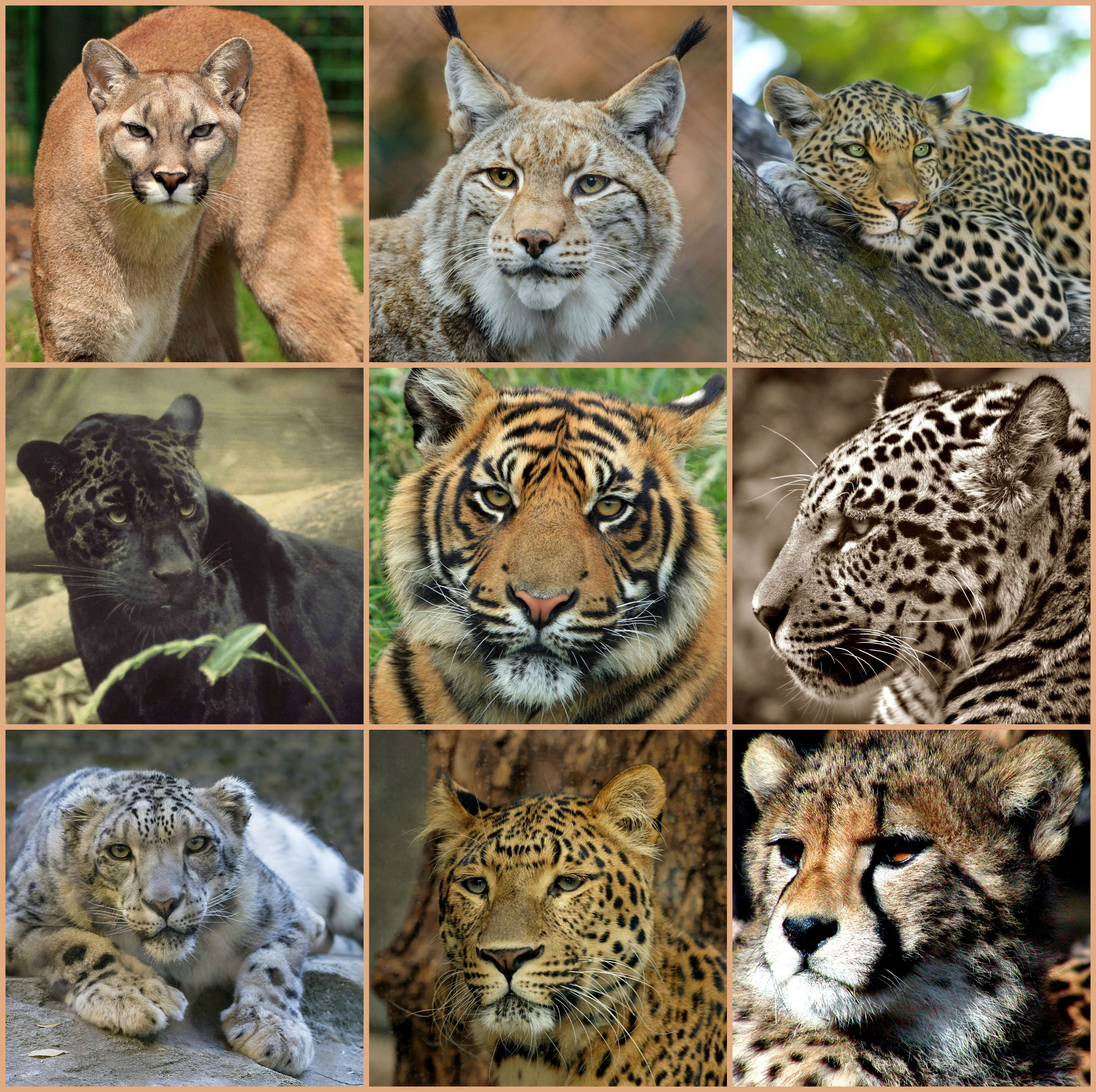 Домики для кошки (70 фото): большие кошачьи домики-лежанки, мягкие игровые модели для кота, высокие плетеные домики, подвесные двухэтажные варианты из дерева