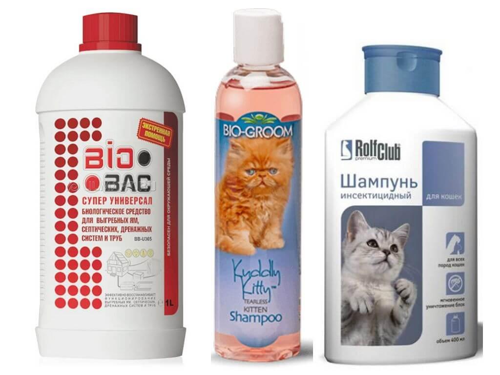 Как выбрать шампунь для кошек от аллергии