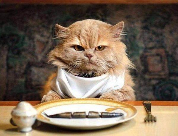 Как вы кормите своих котов? - запись пользователя бу (lacska) в сообществе домашние животные в категории помогите советом - babyblog.ru