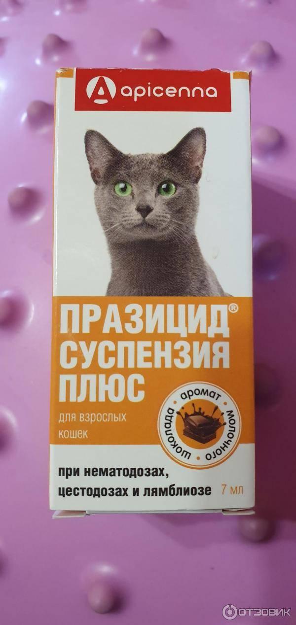 """Почему старой кошке или коту нужна особая защита от гельминтов   нпк """"скифф"""""""