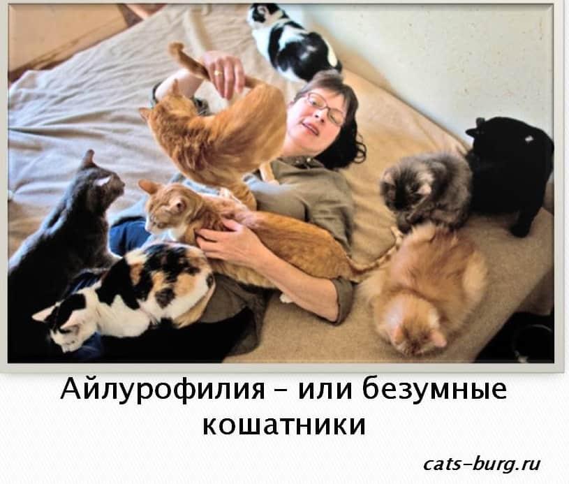 Что можно сказать о характере человека, который не любит кошек