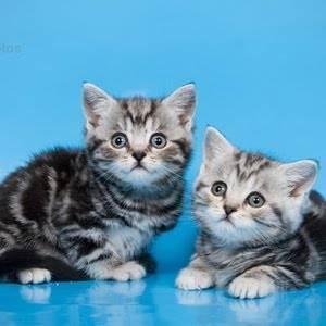 Названия лучших таблеток от глистов для кошек