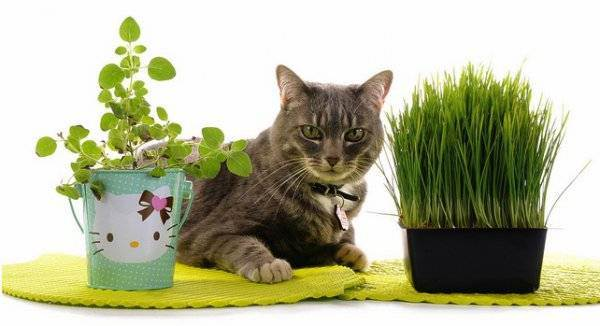 Вредная кошка — posmotre.li