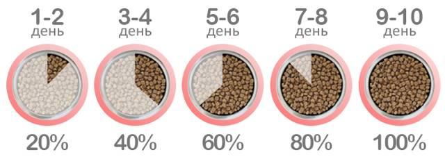 Как правильно перевести кошку или кота на сухой корм?