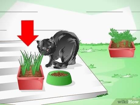Как защитить цветы от кота, методы, безопасные для кошек и для растений || как уберечь цветы от кошки