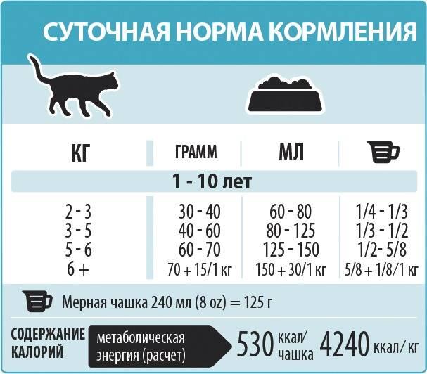 Сколько раз в день кормить кота | сколько должен есть