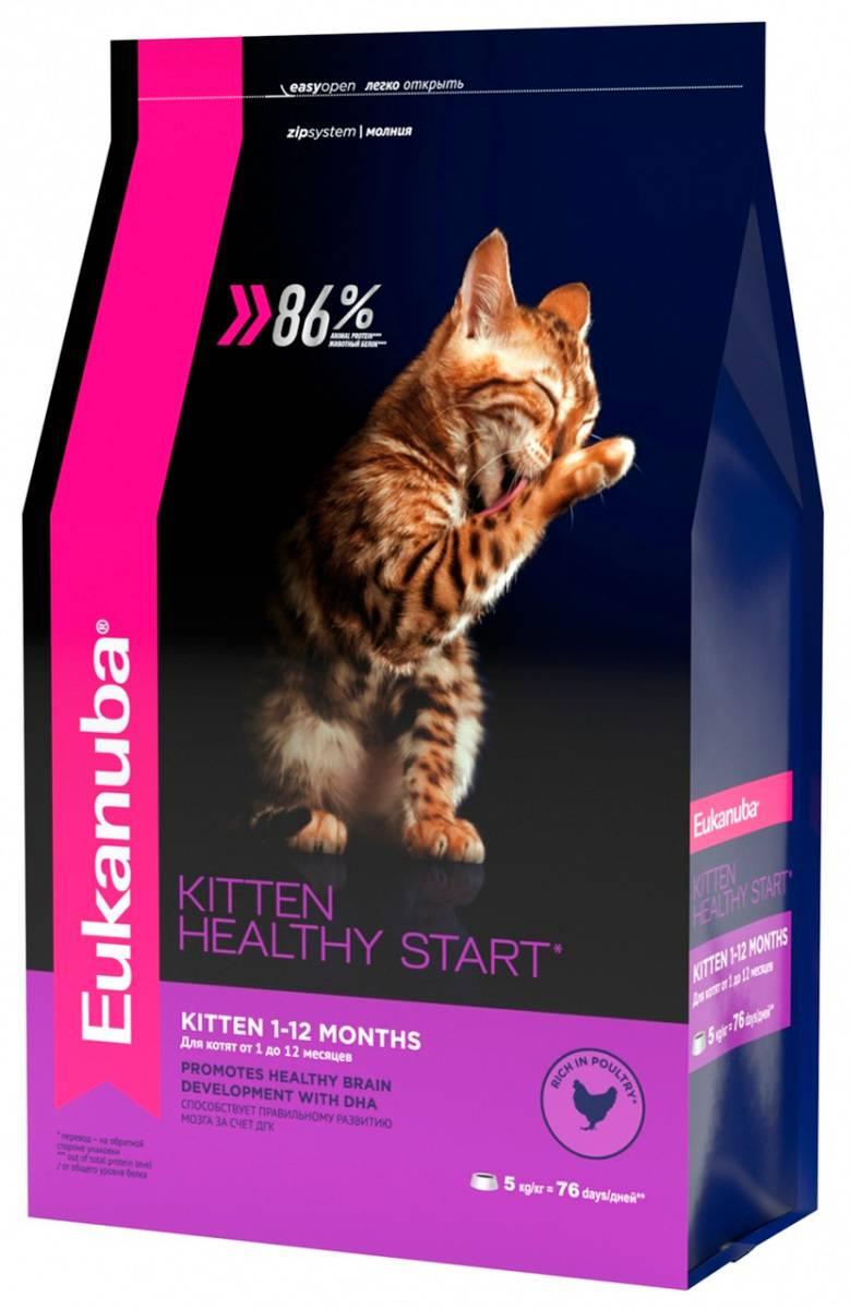 Состав кошачьего корма «грандин», плюсы и минусы сухого и влажного продукта для кошек и котят