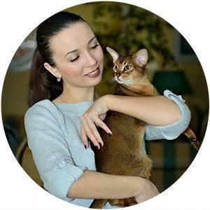 В каком возрасте можно кастрировать домашнего кота - зачем и когда лучше провести кастрацию - лапы и хвост