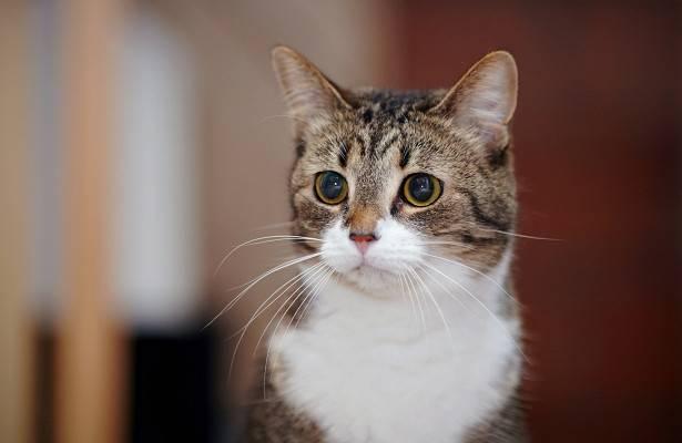 Почему кошка трясет головой и чешет уши?