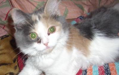 Выделение из глаз у кошки темного цвета. коричневые выделения из глаз у кошки: причины, лечение, профилактика - новая медицина