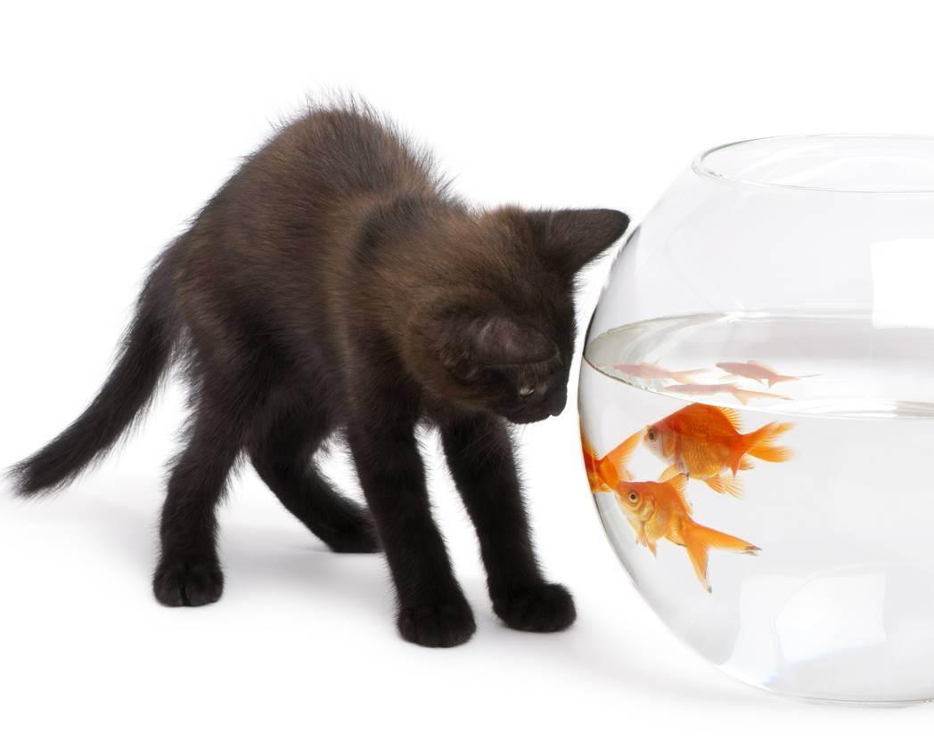 Передержка кошек в москве, недорого - цена на передержку котов
