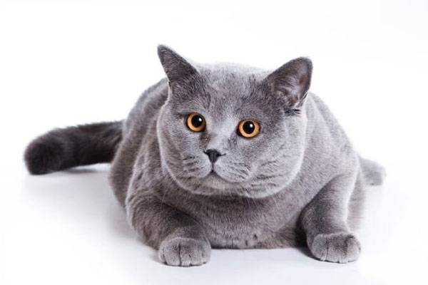 Питание, гигиена, сон у кошек