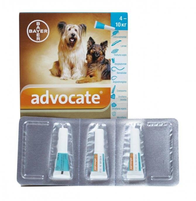 Ветеринарный препарат адвокат для кошек: инструкция по применению - вет-препараты