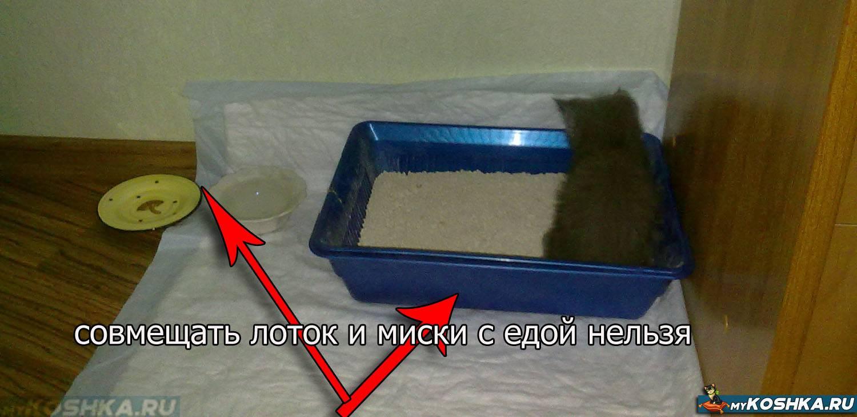 Как отучить кошку писать в неположенном месте: важные советы как отучить кошку писать в неположенном месте: важные советы