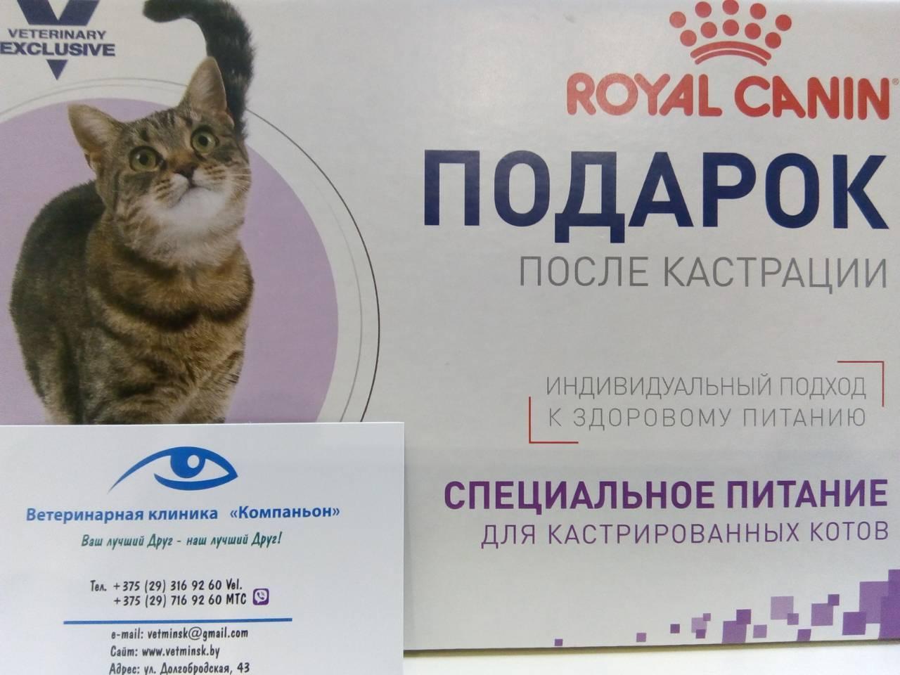 Советы ветеринаров после стерилизации: как правильно кормить кастрированных кошек сухим и влажным кормом, в том числе уличную стерилизованную кошку