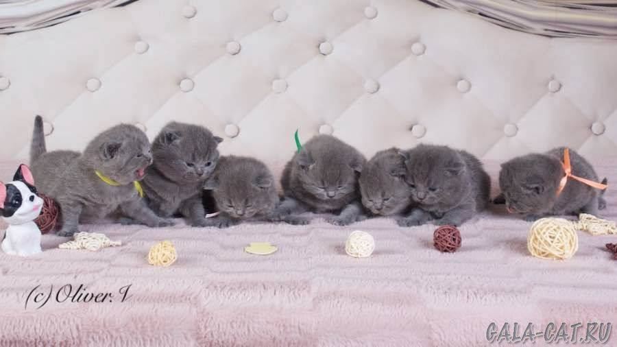 Календарь развития котенка