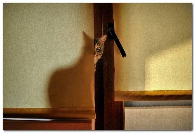 Почему кошка смотрит в пустоту. почему кошка смотрит в стену? почему кошка смотрит в пустоту и шипит