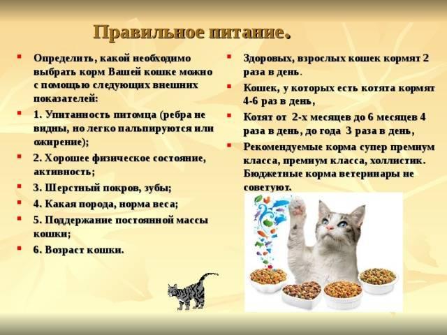 Как правильно кормить кошку натуральной едой: правила выбора и подготовки продуктов