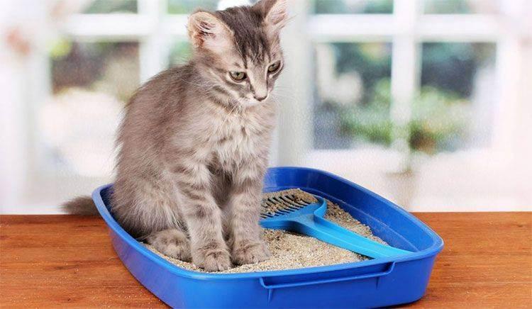 Причины и лечение запора у кошки или кота: чем можно помочь питомцу, что делать в домашних условиях?
