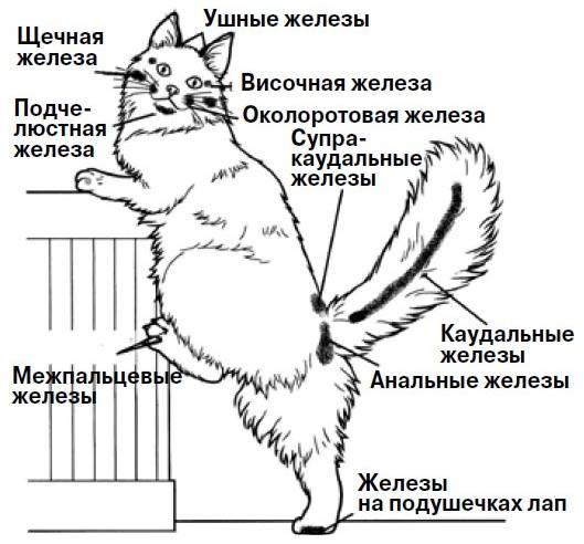 Как сделать кошку ласковой как сделать кошку ласковой