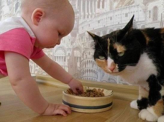 Со скольки месяцев котята начинают есть сами