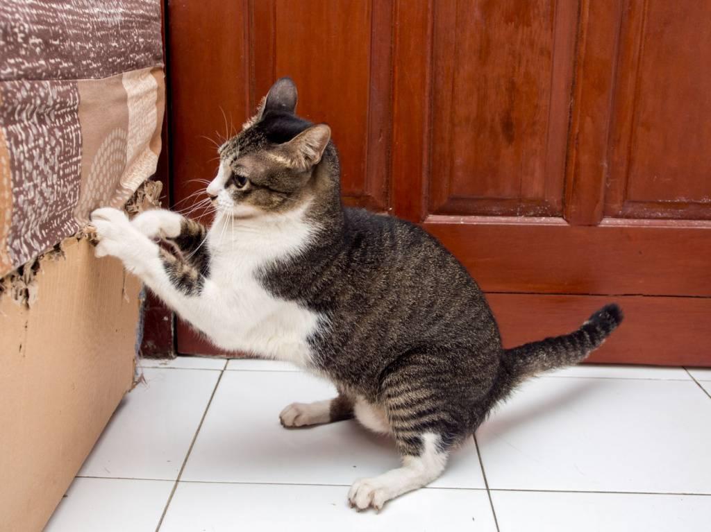 Кошка дерет обои: варианты как отучить портить стены и мебель