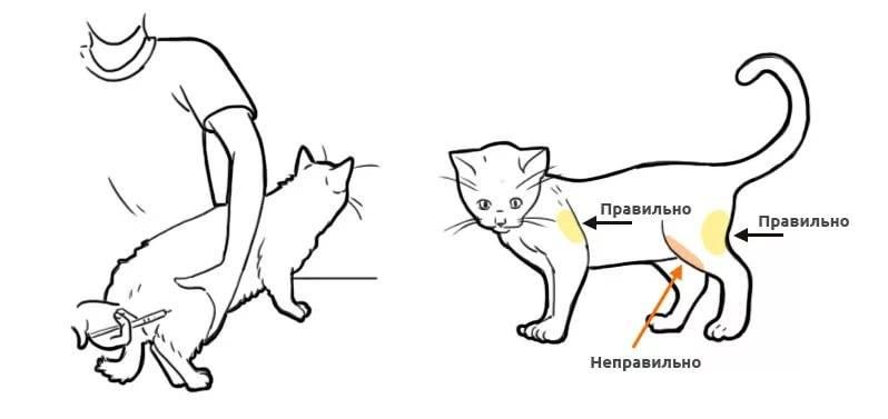 Где у кошки находится холка и как ее найти