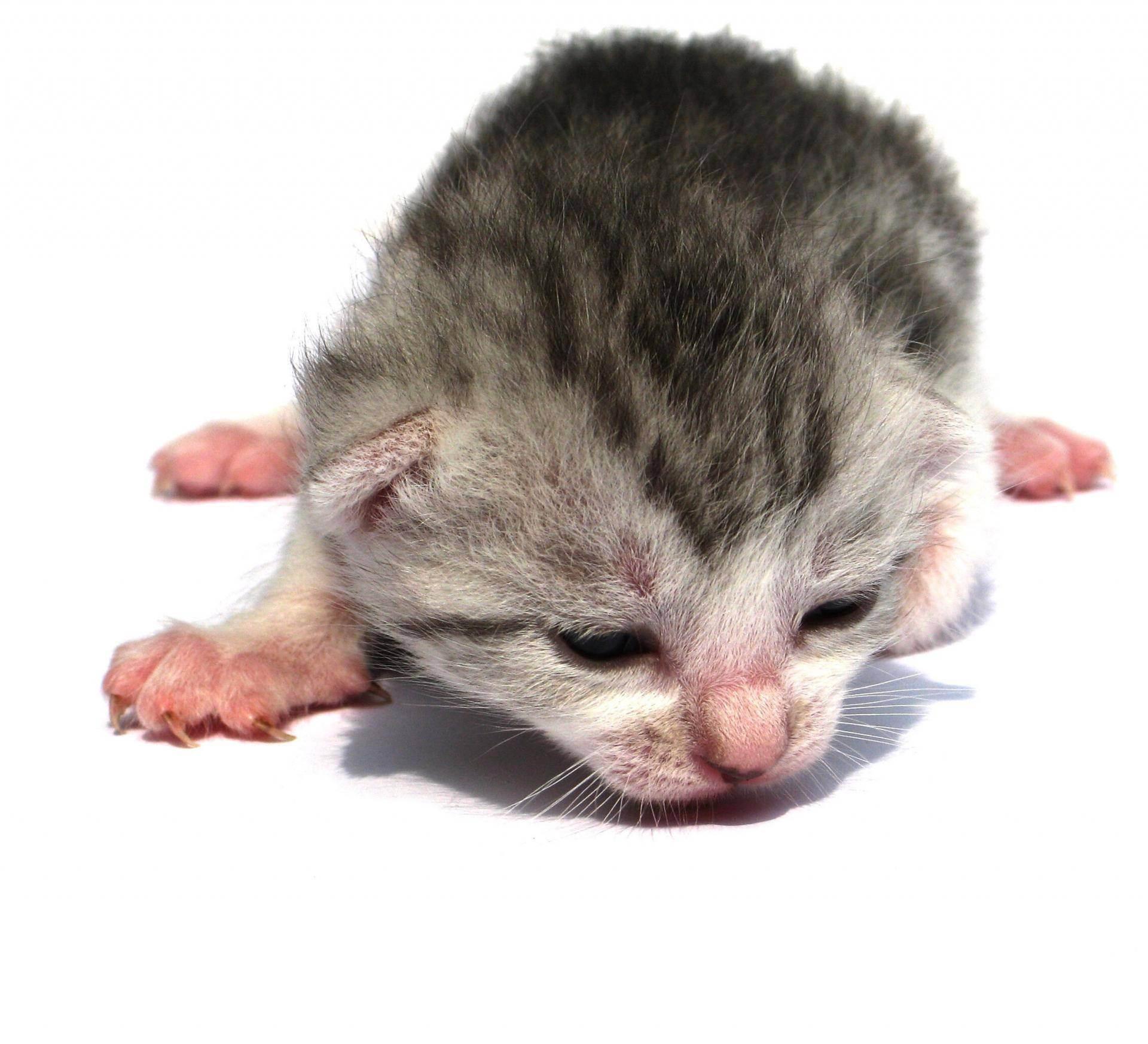 Катозал для чего назначают. катозал: скорая помощь для вашей кошки