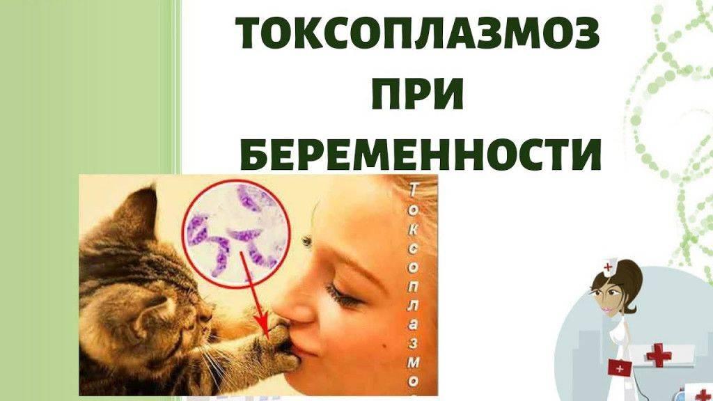 Токсоплазмоз у кошек: симптомы, лечение, профилактика