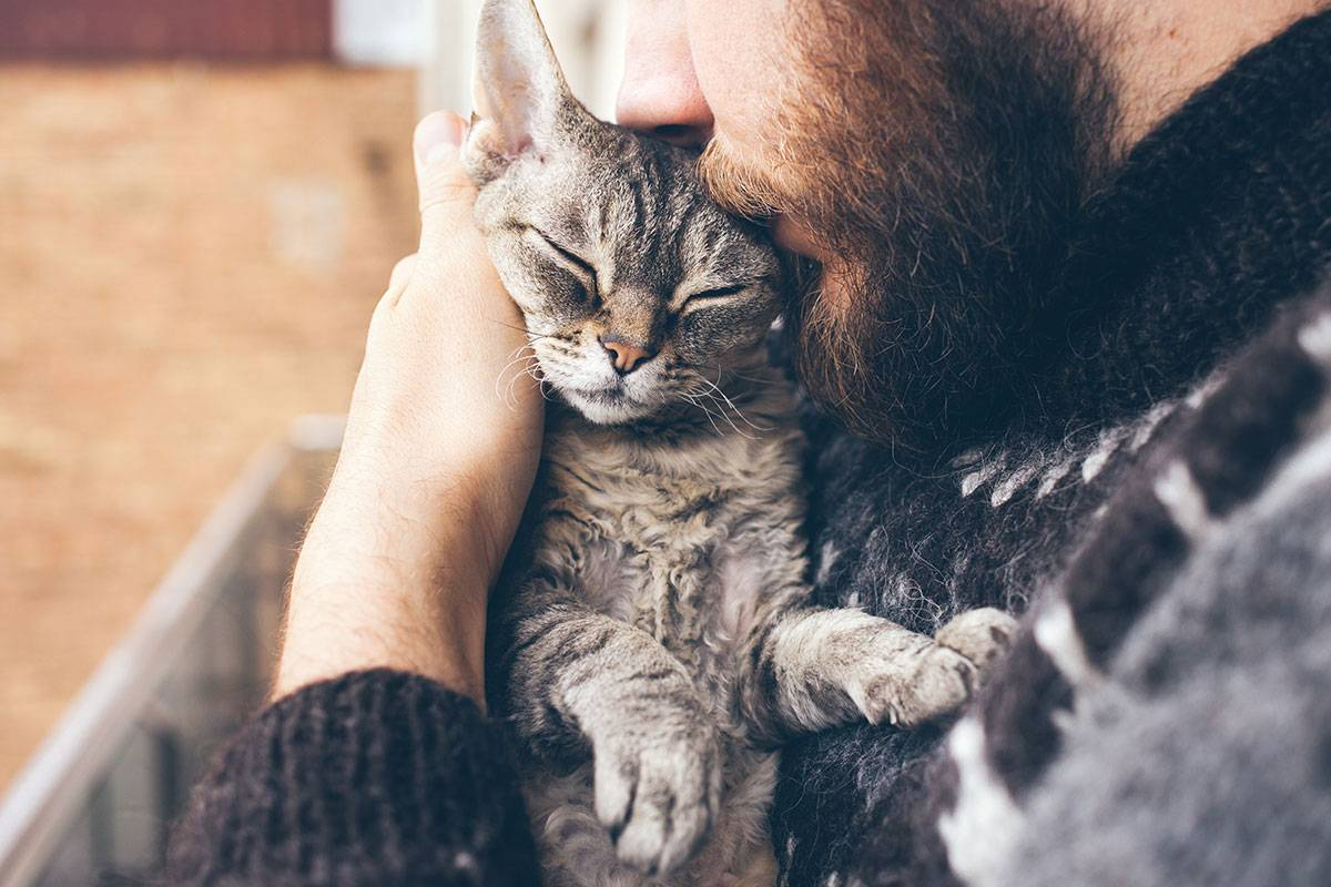 Люди которые любят кошек. психология кошек люди которые любят кошек. психология кошек