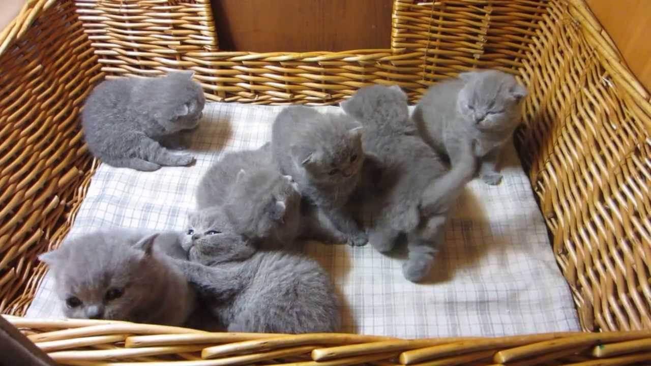 Как обеспечить уход за новорожденными котятами